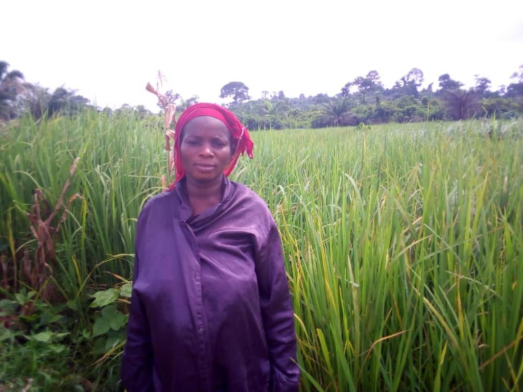 RiceFarmer-Ricefield